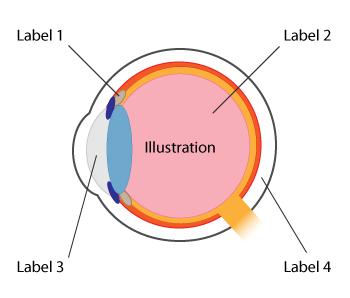 illustration diagram learn about this chart rh datavizcatalogue com illustration diagram infographic illustration diagram of uterus